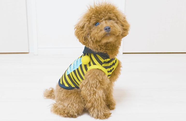 【100均】ダイソーの犬服でミツバチ・てんとう虫・パンダになりきる子犬