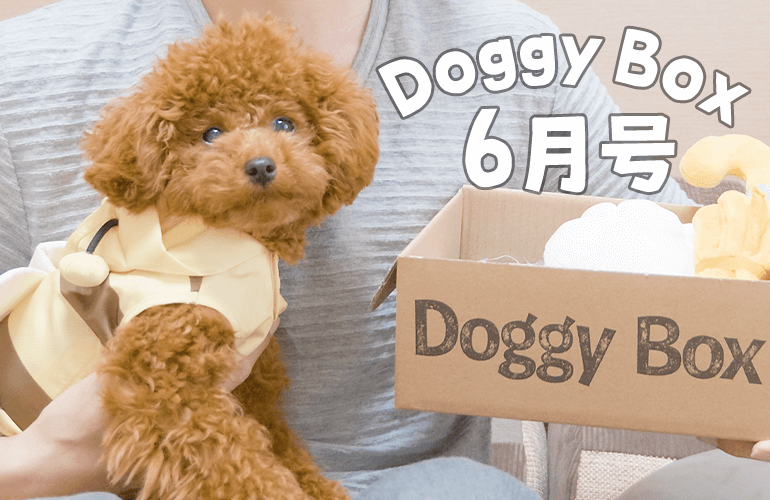 興奮しすぎて目をキラキラさせる子犬が可愛すぎる!【ドギーボックス6月号】