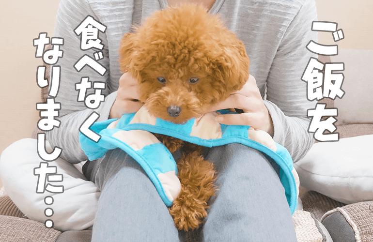 【悲報】愛犬が突然ご飯を食べなくなりました…【トイプードル】