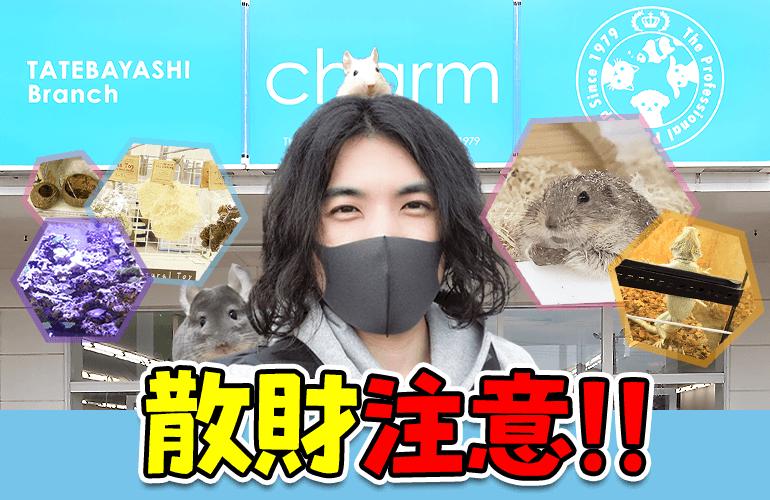 【Vlog】小動物飼いさんにもおすすめ!チャーム 館林店の品揃えがとにかく凄かった!