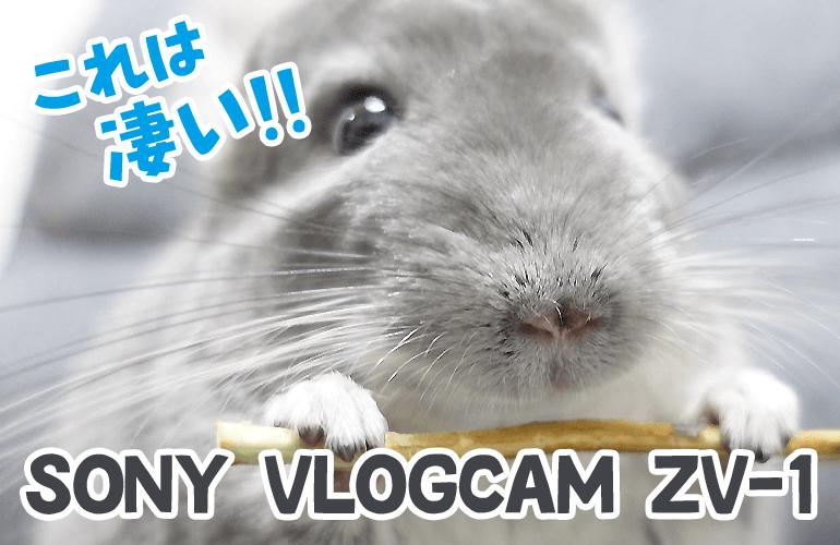 今話題のVlog専用カメラでチンチラとデグーを撮影したらクオリティが高すぎて感動!【SONY ZV-1 VLOGCAM】